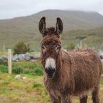 On Holidays in Ireland Warfarin Patients?